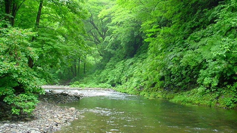 Khu rừng nguyên sinh cực đẹp tại Phú Quốc
